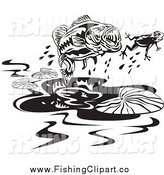 Clip Art of a Black and White Largemouth Bass Fish Chasing After a Frog by Patrimonio