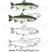 Clip Art of Chum Salmon Fish by Vector Tradition SM