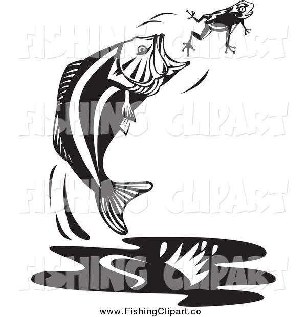 Clip Art of a Black and White Jumping Largemouth Bass Fish Trying to Catch a Frog