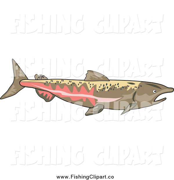 Clip Art of a Chinook Salmon