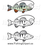 Clip Art of Colored and Black and White Perch Fish and Fishing Line by Vector Tradition SM